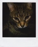 MIMI -my sweet&crazy cat