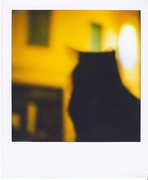 Carmen cat on da window