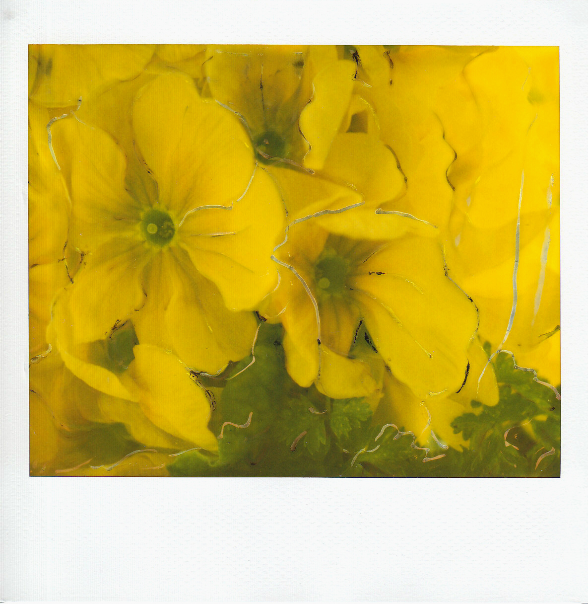 fiore-3