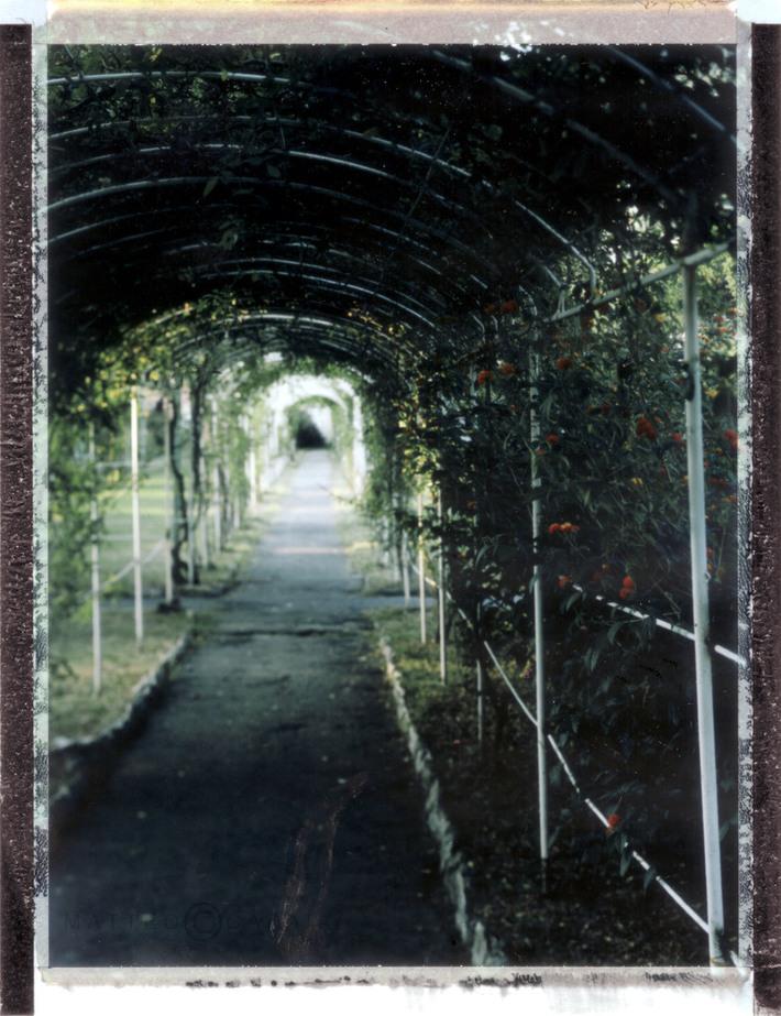 Giardini segreti #5 P