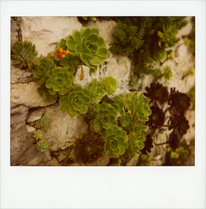 """Modica, muro """"fiorito"""""""