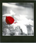 Un solo.............fiore   Uno solo...........