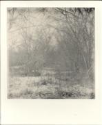 Abandoned field - 2