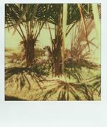 25/04/13 - Zoo Safary - Lemure