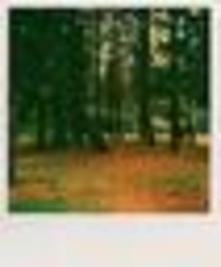 Deer In Woods - Parco Legnano -
