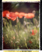 Spring recomposed #2