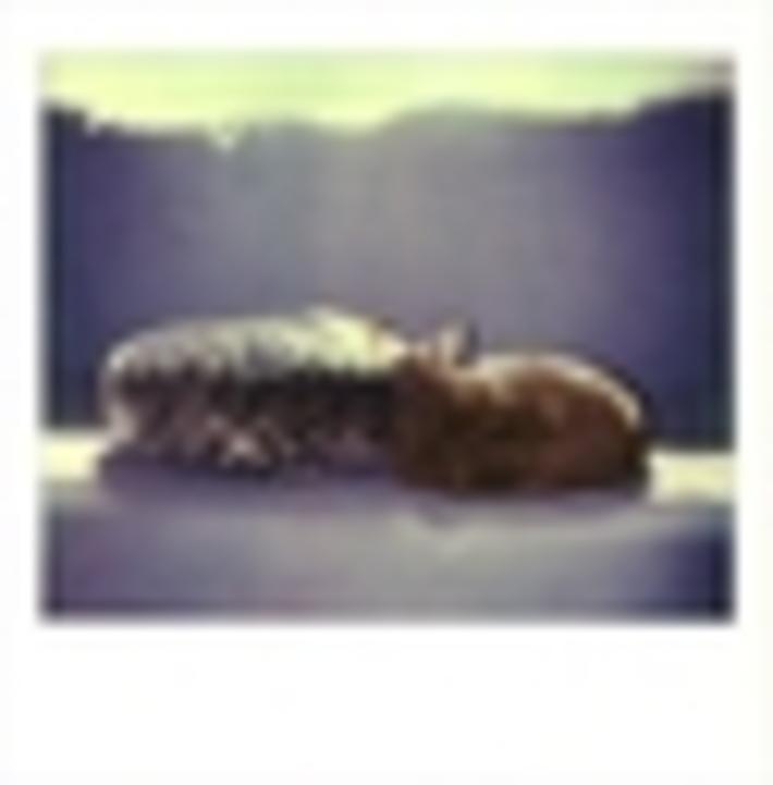 SOGNARE DI ESSERE... (Il mio gatto rosso 041)