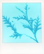 Cyanotype Impressions: Tribute to Anna Atkins