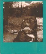 Bulldog in secondo piano -_-