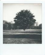 Trittico Tremelloni-Tree-