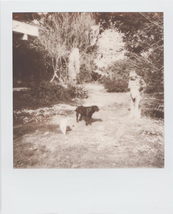 Cani e nonna