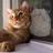 cathleen adams [ cat ]