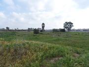 Ballona Wetlands, Area C