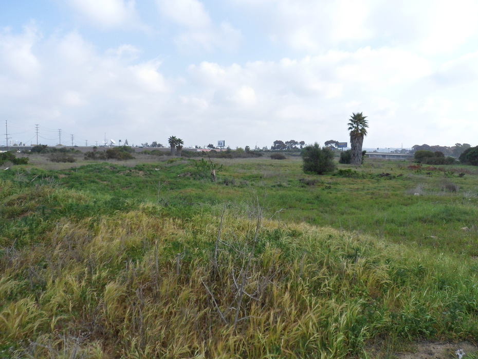 Ballona Wetlands, Area C
