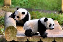 Free Book: The Definitive Guide to Pandas - Data Science Central