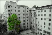 Urbanization & Pollution