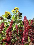 Food as Medicine Year Round- Garden as Medicine Series - Part IV