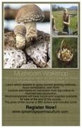 Backyard Mushroom Cultivation