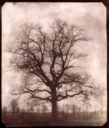 I have captured a shadow! – William Henry Fox Talbot and the invention of photography