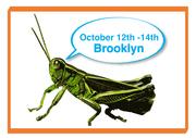 Grasshopper Training Session NYC
