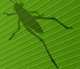 deCode Grasshopper (de-fə-ˈni-shən)