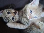 Raine and Finn