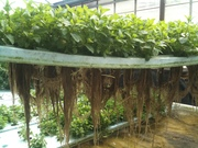 Online Introduction to Aquaponics