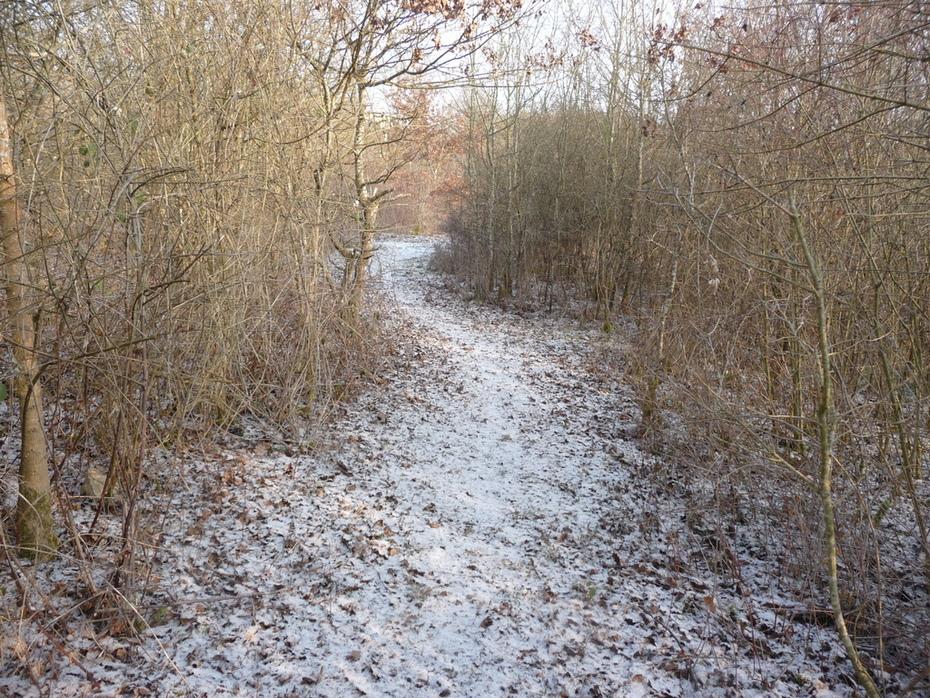 Path at Amida France in snow