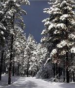 Path in Winter