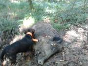 solitaire tuer au ferme