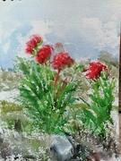 Poppies near Meylers IMG_20190608_144604