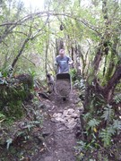 Nicols Creek Shingle 13