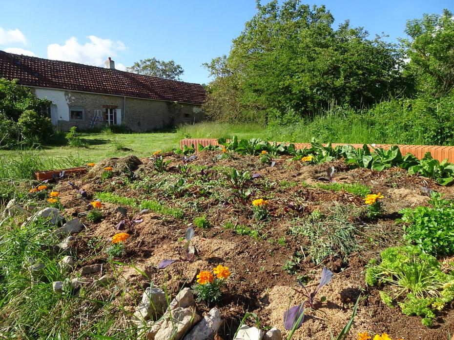 Raised vegetable plot