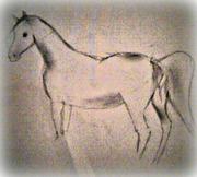 Häst teckningar