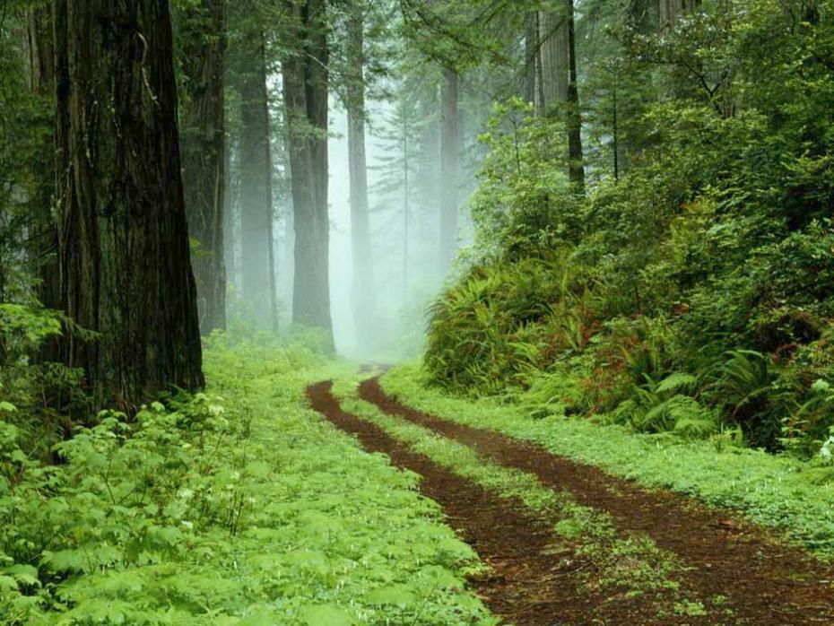A Walk to Peace