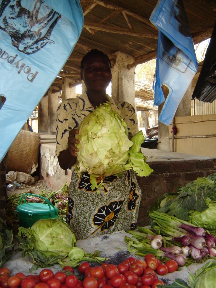 Healthy Head of Cabbage