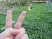 Peace sign hand, Peace sign Tree. March 2012