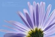 mac's flower