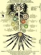 Kabbalah & Tree of Life