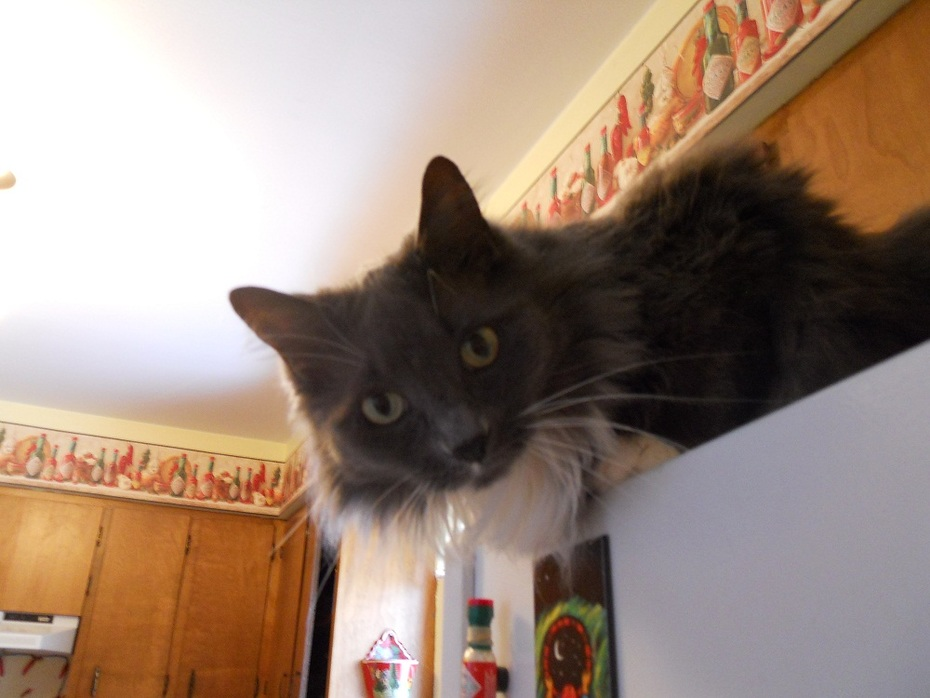 Once, after an abundance of catnip, I hallucinated that I was ascending to the heavens and touching the whiskers of God. I woke up on top of the refrigerator