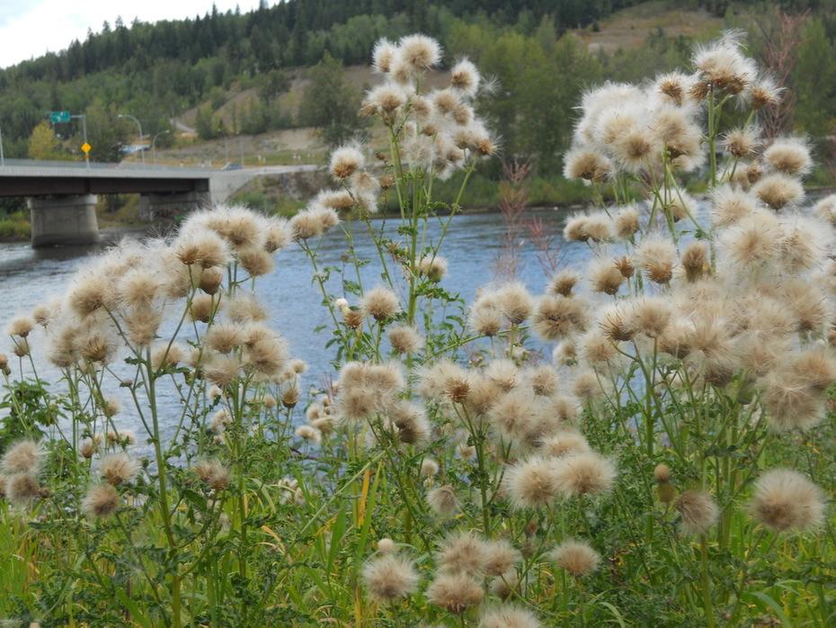 River Nechako