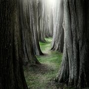 che Enchanted Wood, Derbyshire, England - which fairytale character will be coming down this path
