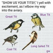 Tits! :D