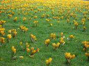 Ronde de fleurs en si bémol majeur