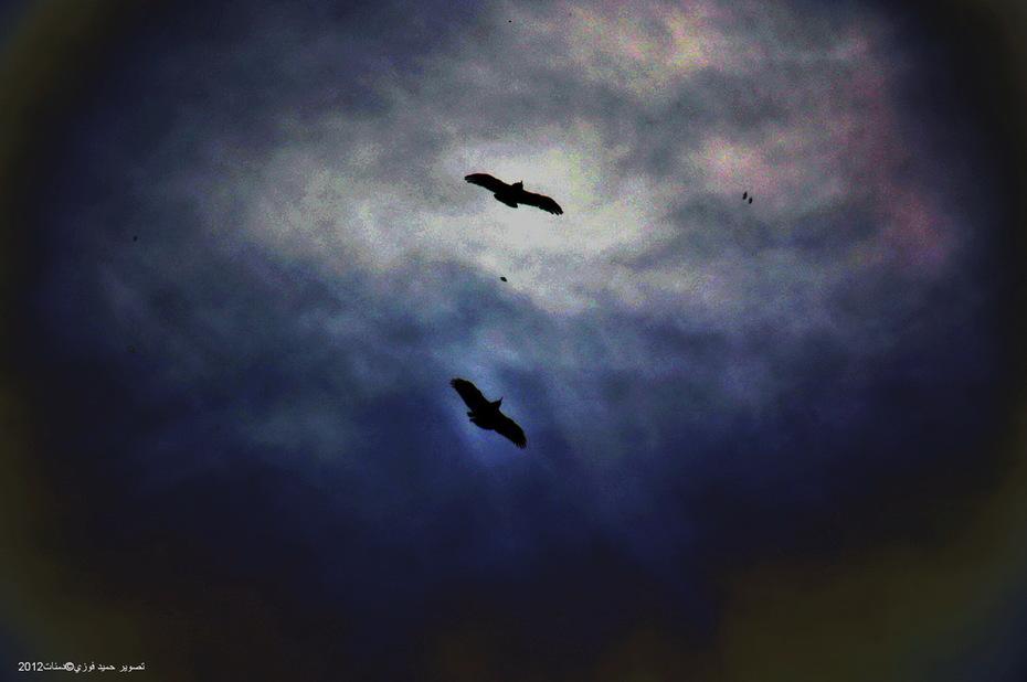 Jeux de corbeaux