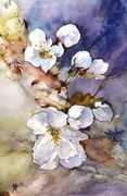 Cerisier  -