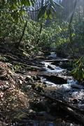 Buffalo Mtn - Hartsell Hollow Trail