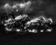 Black-Horse-2698