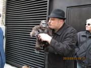 Everyone loves King Kong