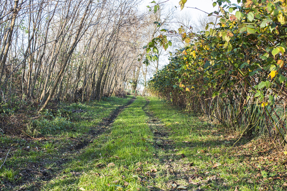 Blackberry Road